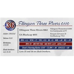 ELLINGSON THREE RIVERS 0110