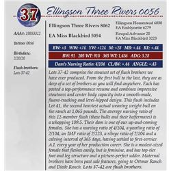 ELLINGSON THREE RIVERS 0056