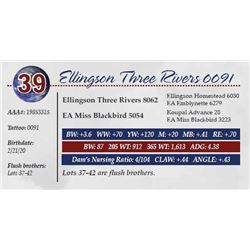 ELLINGSON THREE RIVERS 0091