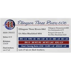 ELLINGSON THREE RIVERS 0170