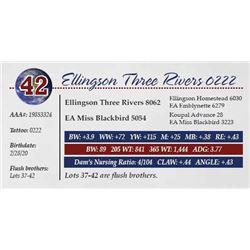 ELLINGSON THREE RIVERS 0222
