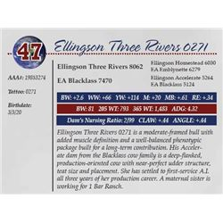 ELLINGSON THREE RIVERS 0271
