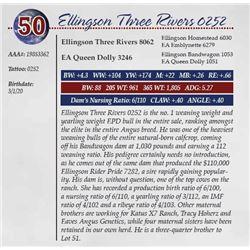 ELLINGSON THREE RIVERS 0252