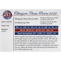 ELLINGSON THREE RIVERS 0230