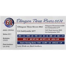 ELLINGSON THREE RIVERS 0072