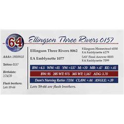 ELLINGSON THREE RIVERS 0157