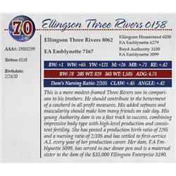 ELLINGSON THREE RIVERS 0158