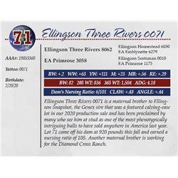 ELLINGSON THREE RIVERS 0071