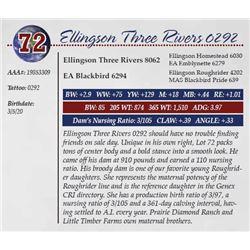 ELLINGSON THREE RIVERS 0292