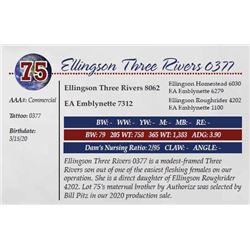 ELLINGSON THREE RIVERS 0377