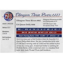 ELLINGSON THREE RIVERS 0227