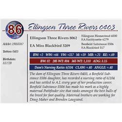 ELLINGSON THREE RIVERS 0403