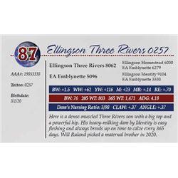 ELLINGSON THREE RIVERS 0257