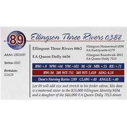 ELLINGSON THREE RIVERS 0382