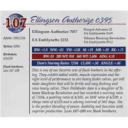 ELLINGSON AUTHORIZE 0395