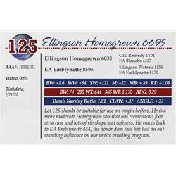 ELLINGSON HOMEGROWN 0095