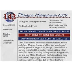 ELLINGSON HOMEGROWN 0349