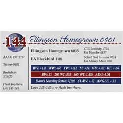 ELLINGSON HOMEGROWN 0401