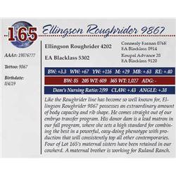 ELLINGSON ROUGHRIDER 9867