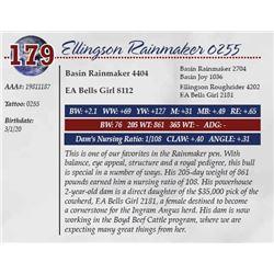 ELLINGSON RAINMAKER 0255