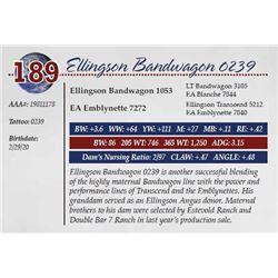 ELLINGSON BANDWAGON 0239