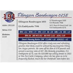 ELLINGSON BANDWAGON 0258