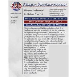 ELLINGSON FUNDAMENTAL 0488