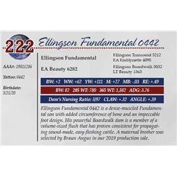 ELLINGSON FUNDAMENTAL 0442