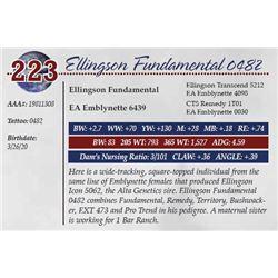 ELLINGSON FUNDAMENTAL 0482