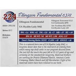 ELLINGSON FUNDAMENTAL 0372