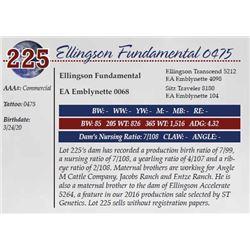 ELLINGSON FUNDAMENTAL 0475