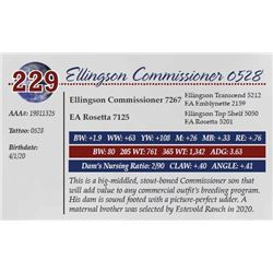 ELLINGSON COMMISSIONER 0528