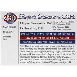 ELLINGSON COMMISSIONER 0596
