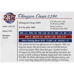 ELLINGSON CHAPS 0390