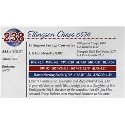 ELLINGSON CHAPS 0574