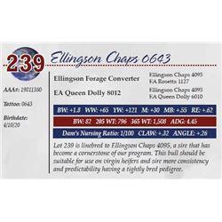 ELLINGSON CHAPS 0643