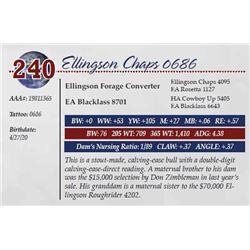 ELLINGSON CHAPS 0686