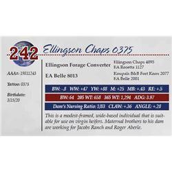 ELLINGSON CHAPS 0375