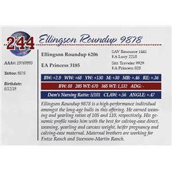 ELLINGSON ROUNDUP 9878