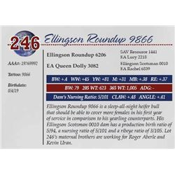 ELLINGSON ROUNDUP 9866