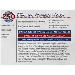 ELLINGSON HOMESTEAD 0351