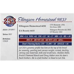 ELLINGSON HOMESTEAD 9837