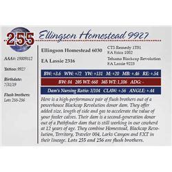 ELLINGSON HOMESTEAD 9927
