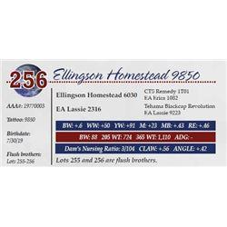 ELLINGSON HOMESTEAD 9850