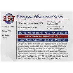ELLINGSON HOMESTEAD 9870
