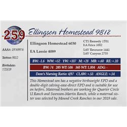 ELLINGSON HOMESTEAD 9812