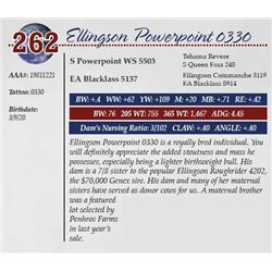 ELLINGSON POWERPOINT 0330