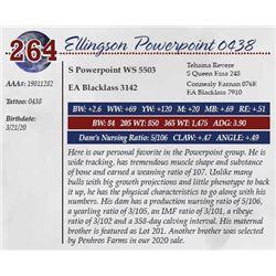 ELLINGSON POWERPOINT 0438