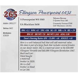 ELLINGSON POWERPOINT 0432