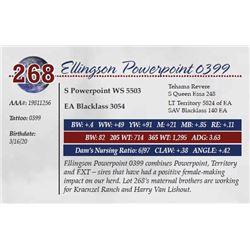 ELLINGSON POWERPOINT 0399